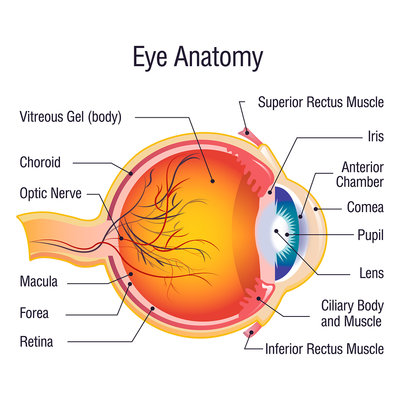 How Does LASIK Eye Surgery Improve Vision?